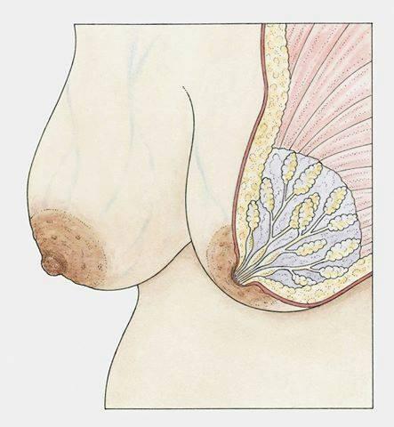 Прыщ на ореоле при беременности