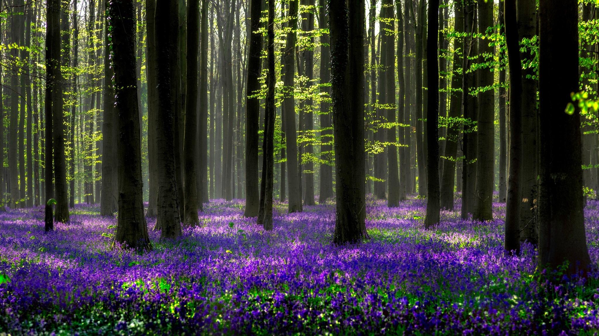 Фото весенний лес с цветами