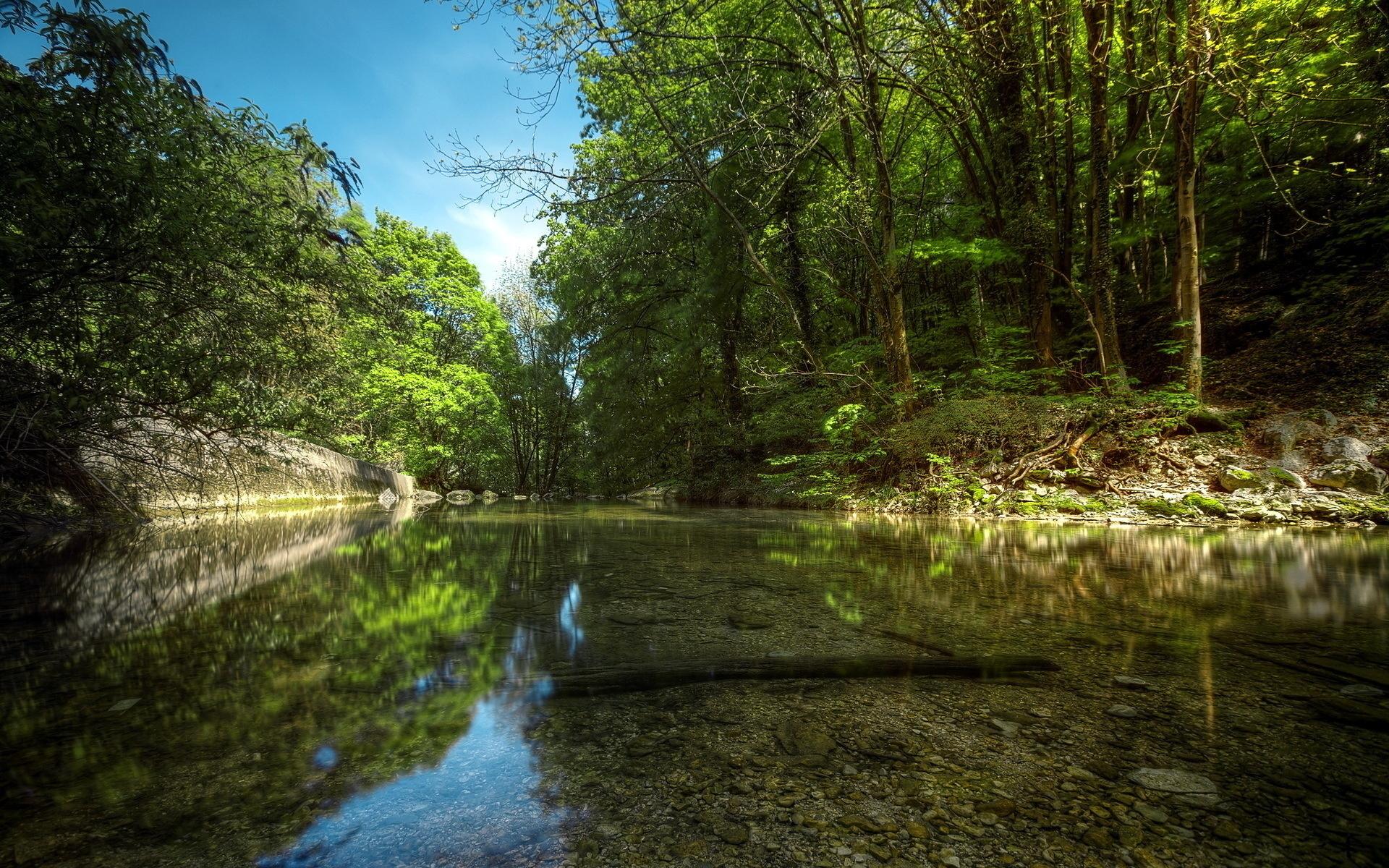 фото лес река природа