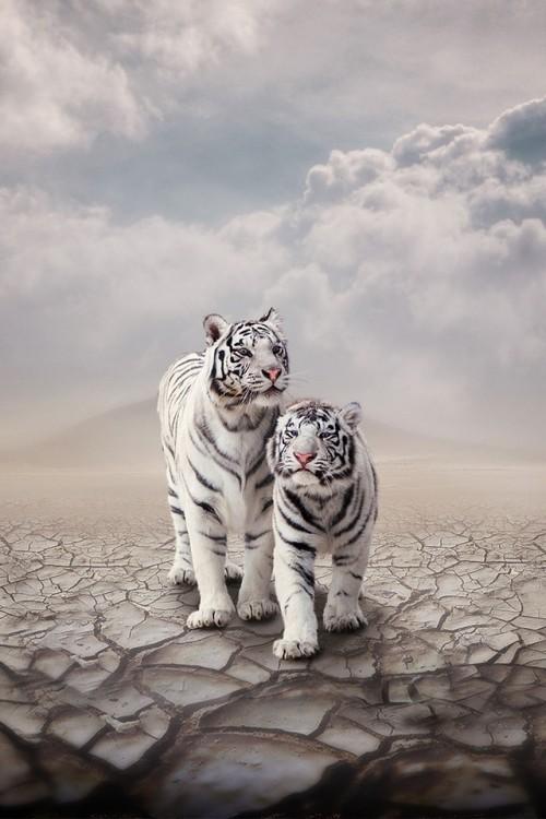 Tiger409.jpg