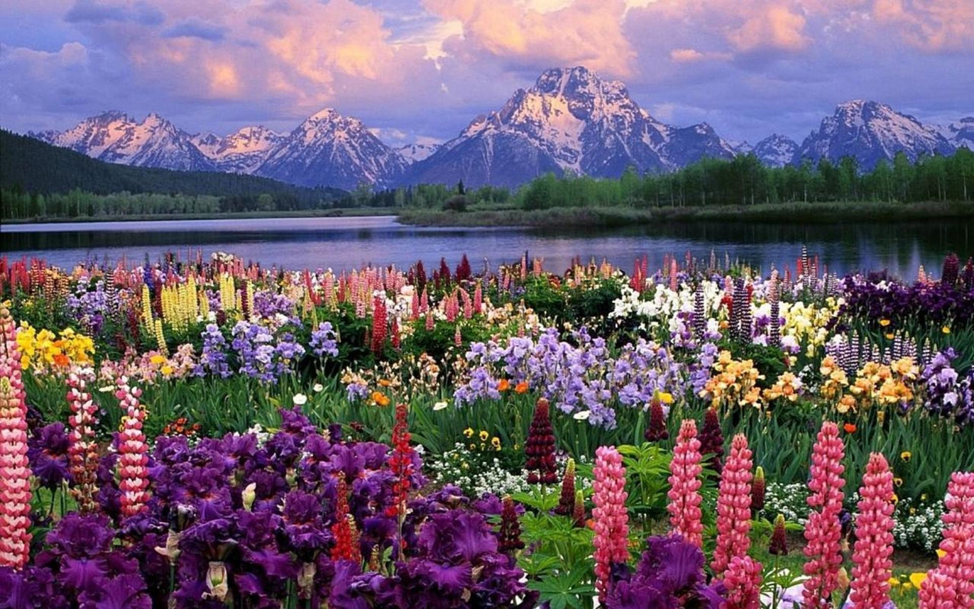 Фото цветов в хорошем качестве - Красивые фотографии