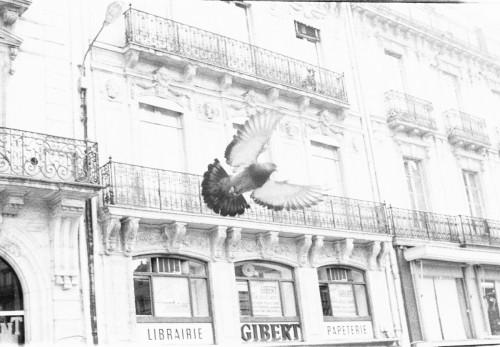 peinture_oiseaux1.md.jpg
