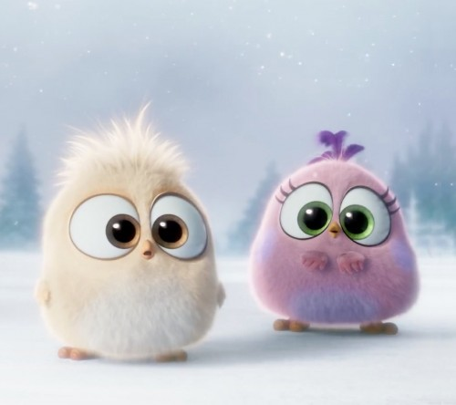 Angry_Birds-wallpaper-10902523.jpg