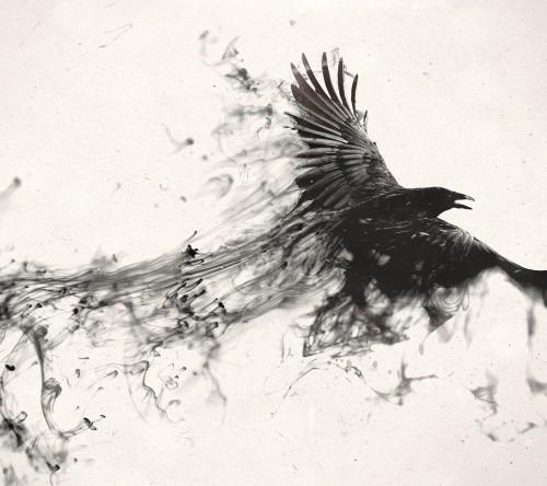 black_bird.jpg
