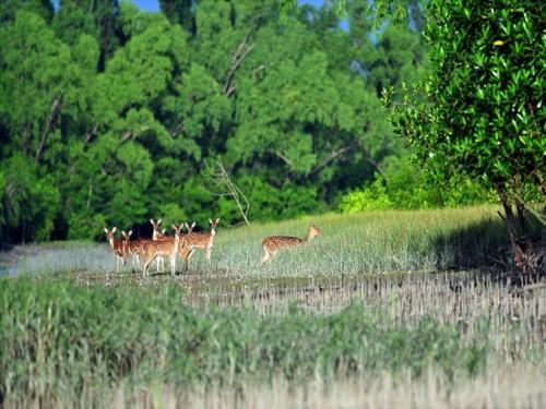 SundarbanBD.jpg