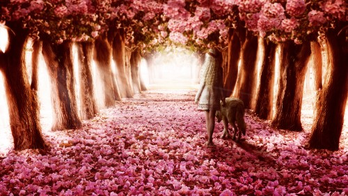 flower_path-HD.jpg