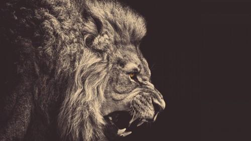 lion_mane_big_cat_grin_93320_1920x1080.jpg