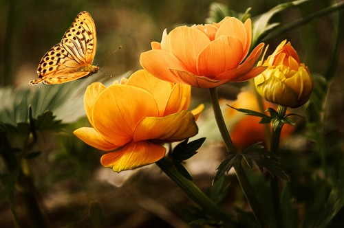 background-with-flower-and-butterfl-1326054113zvO.md.jpg
