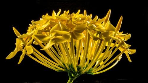 blossom-195893_1920.md.jpg