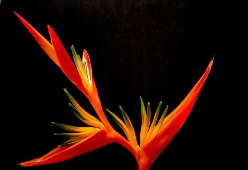 blossom-200933_1920.md.jpg
