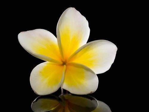 blossom-218469_1920.md.jpg