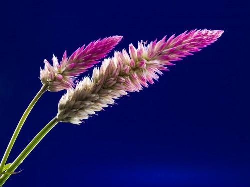 blossom-218483_1920.md.jpg