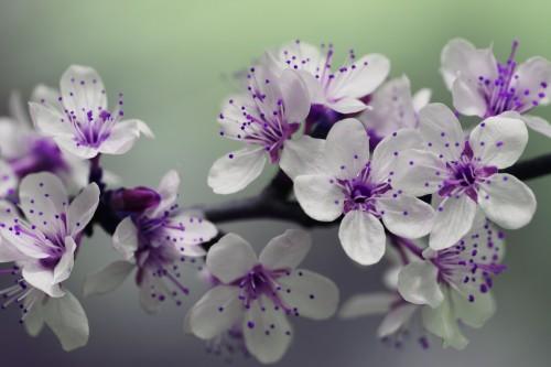 blossom-839594_1920.md.jpg