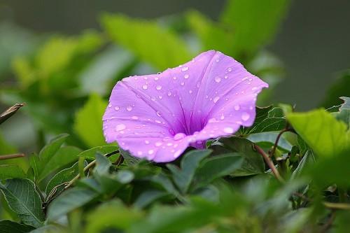 flower-179440_1280.md.jpg