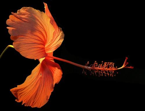 flower-182407_1920.md.jpg