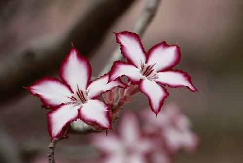 flower-191909_1920.md.jpg