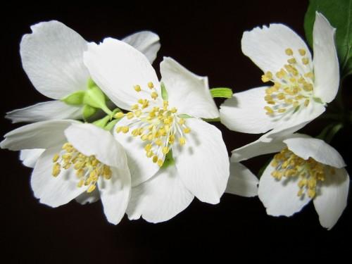 flower-363278_1920.md.jpg