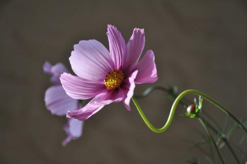 flower-639208_1920.md.jpg