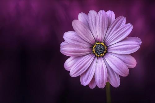 flower-729512_1280.md.jpg