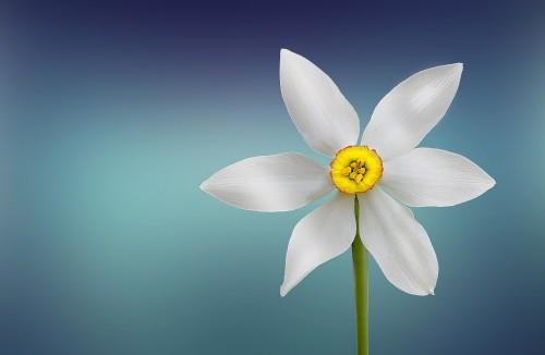 flower-729513_1920.md.jpg