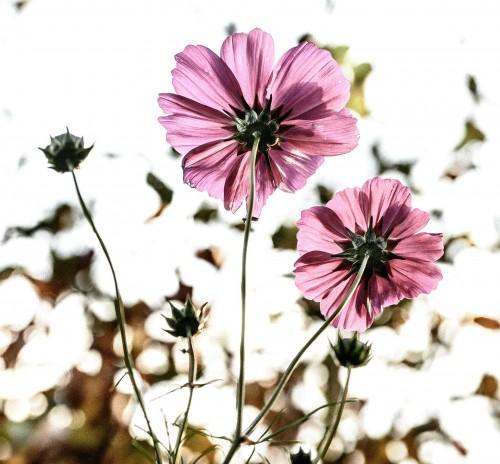 flowers-209144_1920.md.jpg
