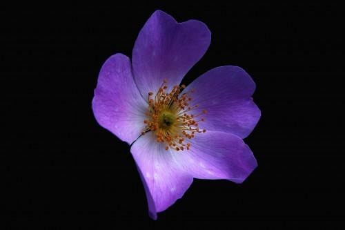flowers-301885_1920.md.jpg