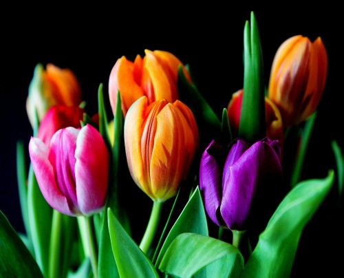 flowers-429041_1280.md.jpg