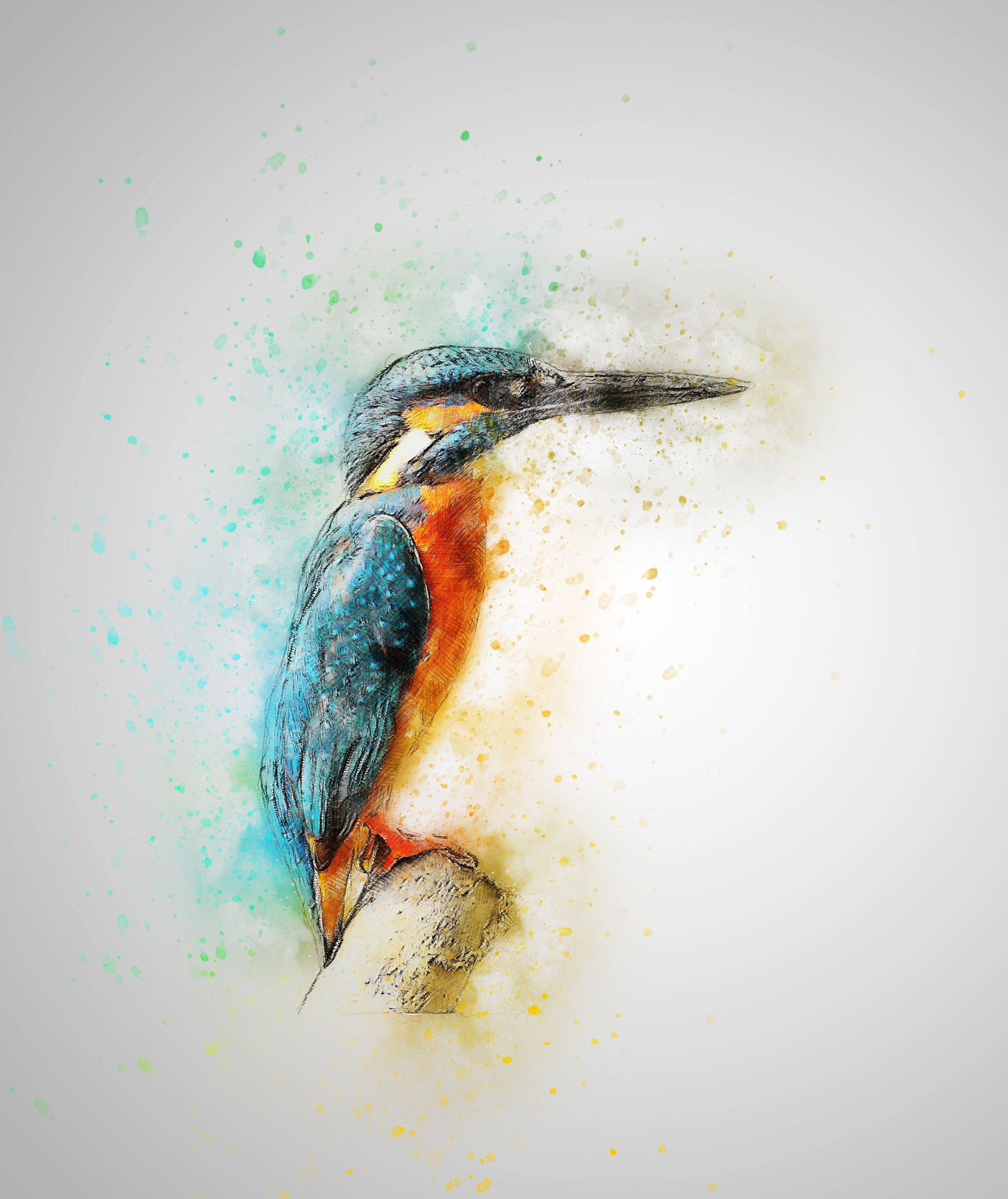 bird-2143860.jpg