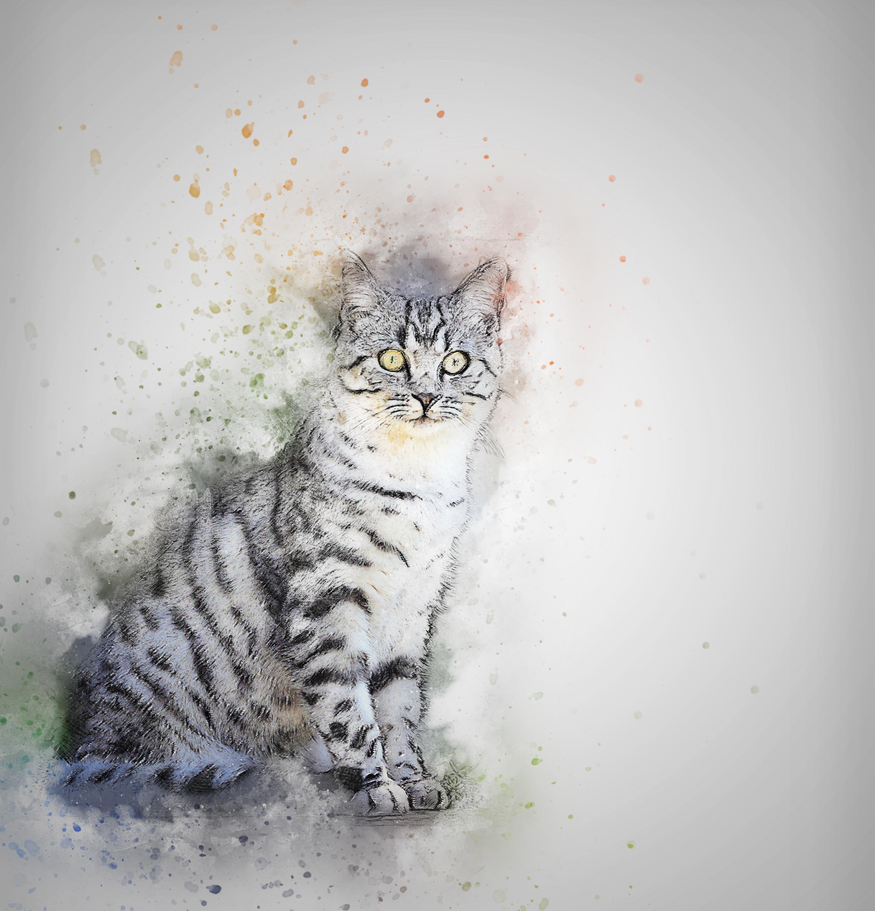 cat-2139040.jpg