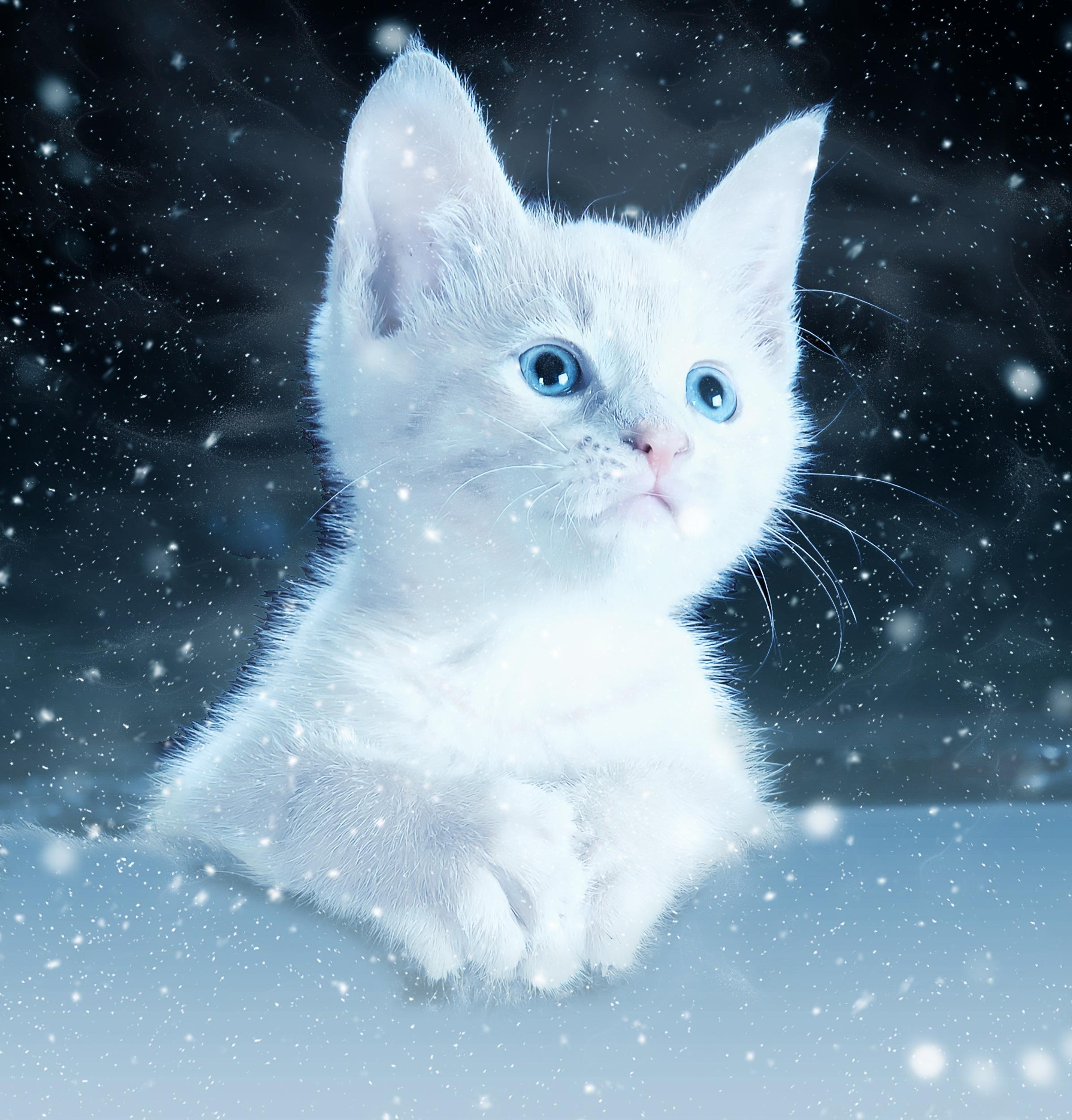 cat-2178155.jpg