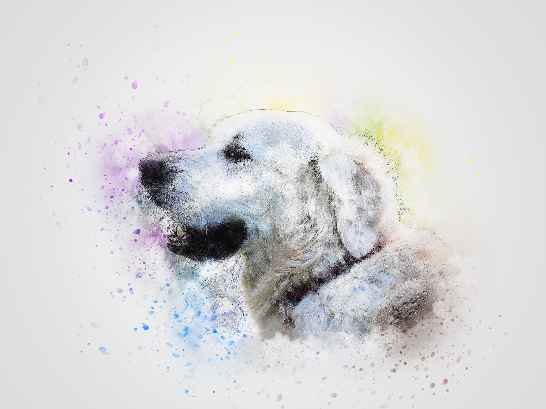 dog-2148712.jpg