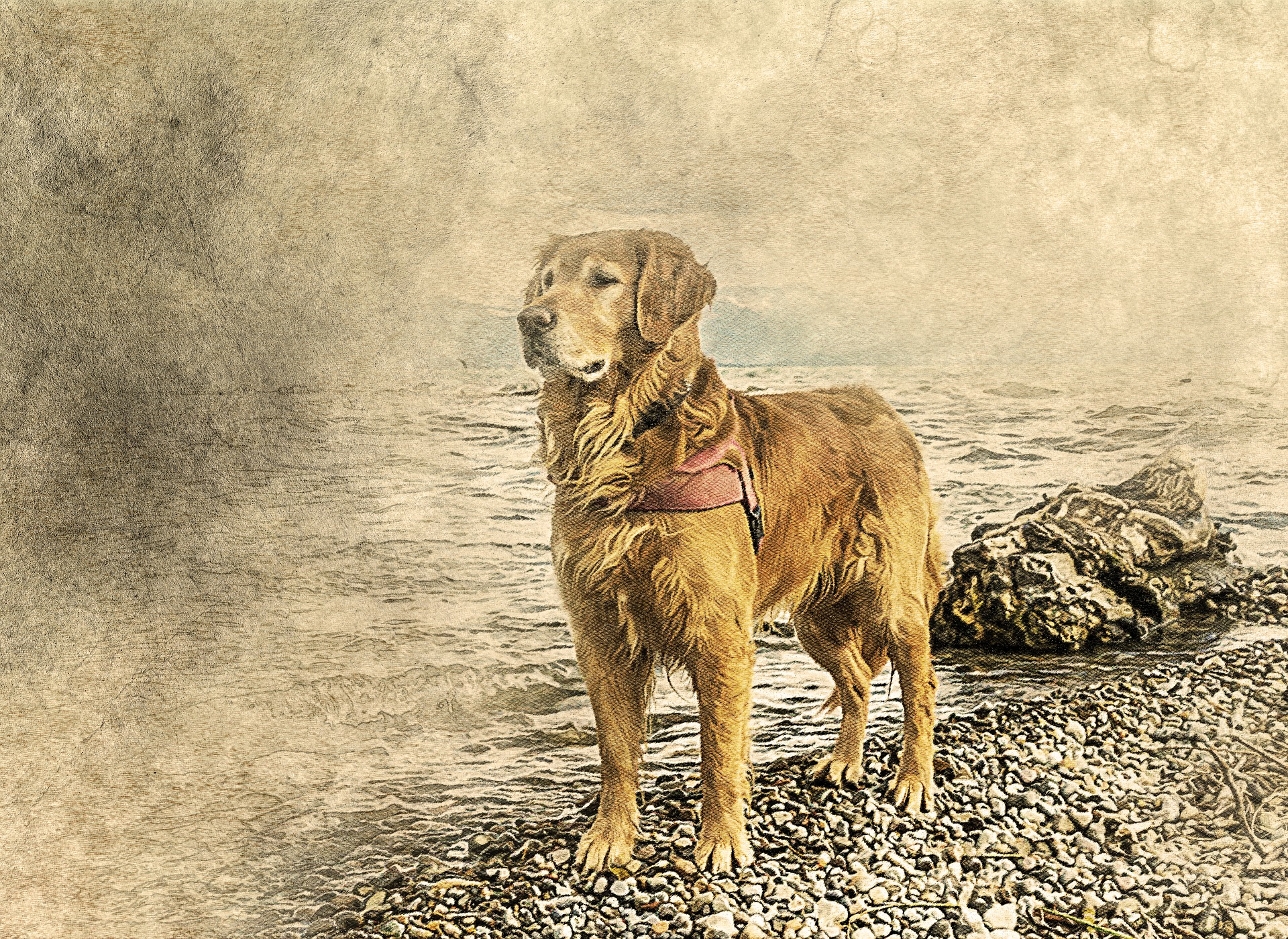 dog-2242836_1920.jpg