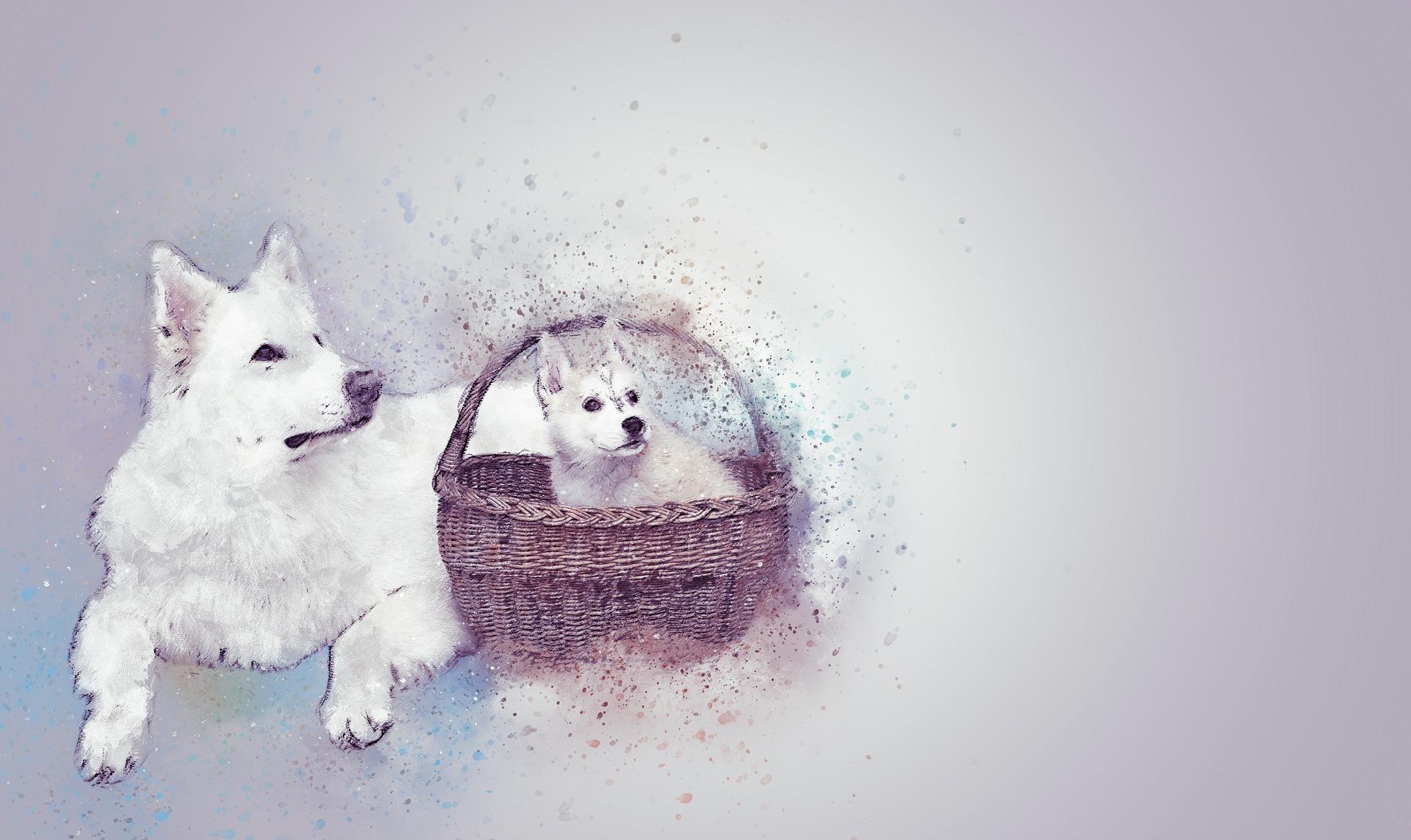 dogs-2205817_1920.jpg