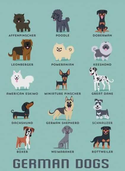 DogsoftheWorld-10.jpg