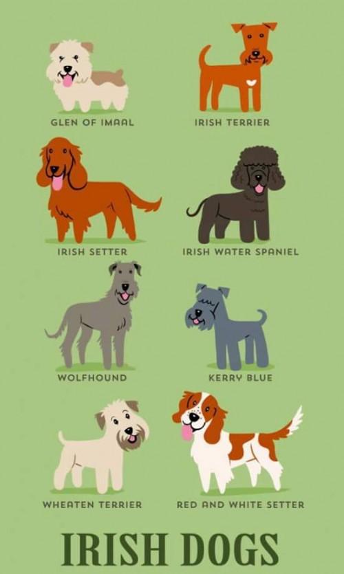 DogsoftheWorld-11.jpg