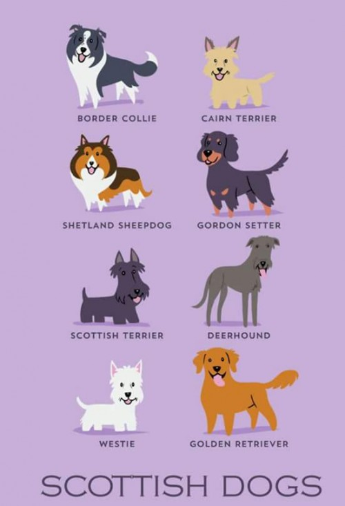 DogsoftheWorld-13.jpg