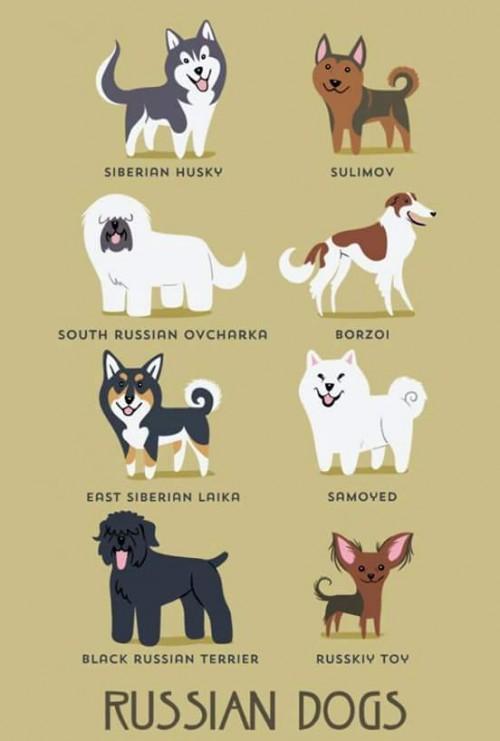 DogsoftheWorld-14.jpg