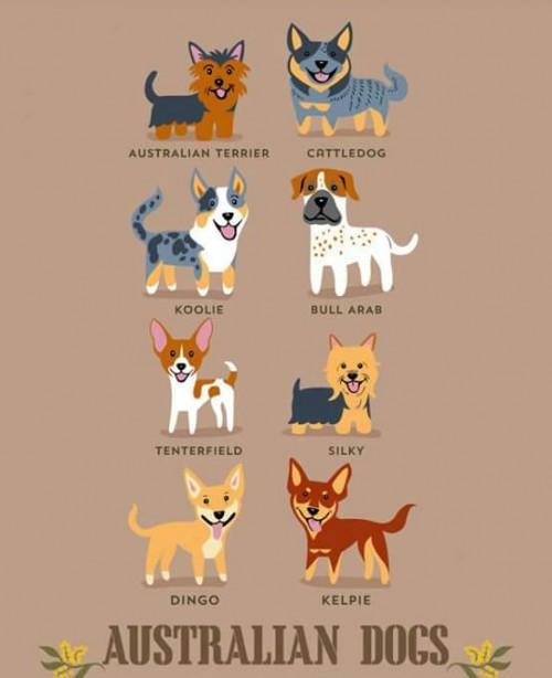 DogsoftheWorld-5.jpg