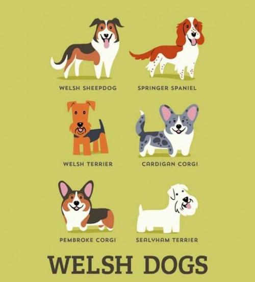 DogsoftheWorld-8.jpg
