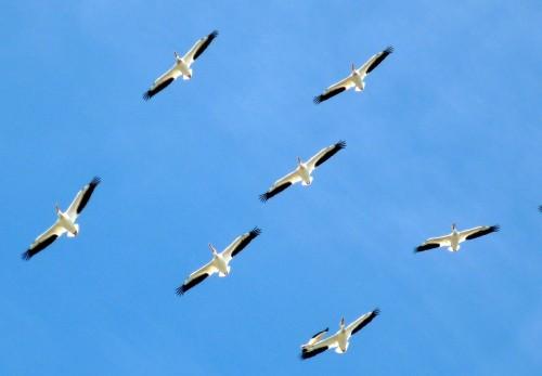birds-112083_1280.md.jpg