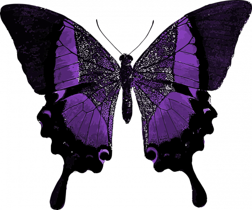 purple-1241702_1280.md.png