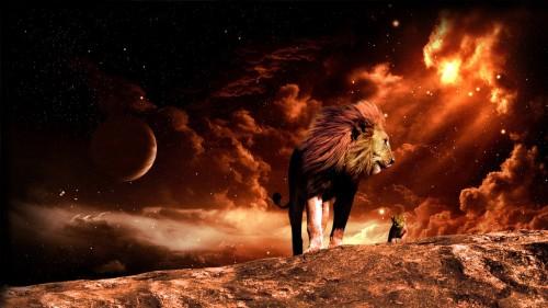 lion-hd_01582134_22.jpg