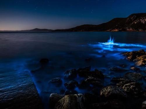 coast_of_tasmania_06.jpg