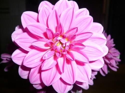 flower-1244077_1920.md.jpg