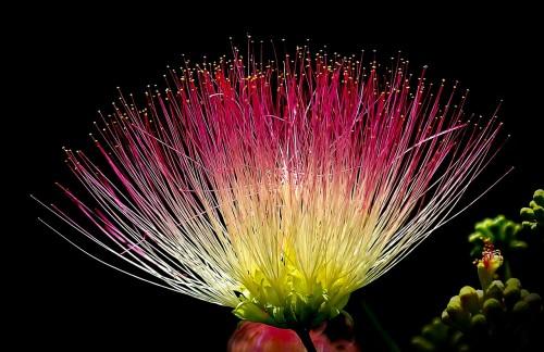 flower-405330_1280.md.jpg