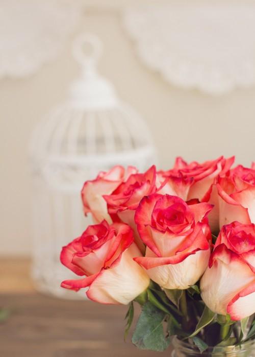 roses-1138923_1920.md.jpg