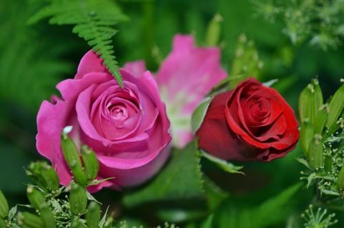 roses-208980_1920.md.jpg