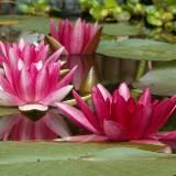 aquatic-plant-182635_1280.th.jpg