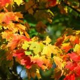 autumn-209479_1920.th.jpg