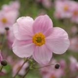blossom-215564_1920.th.jpg